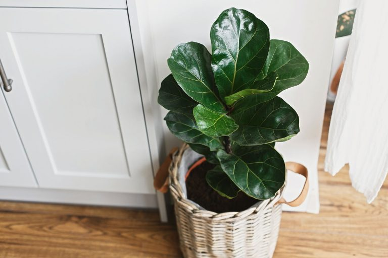 Top 15 Indoor Plants